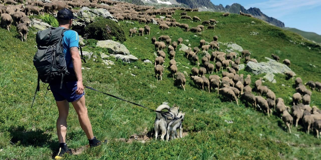 La montagne à moutons en attelage double loup