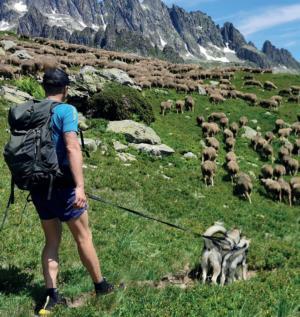 montagne a moutons