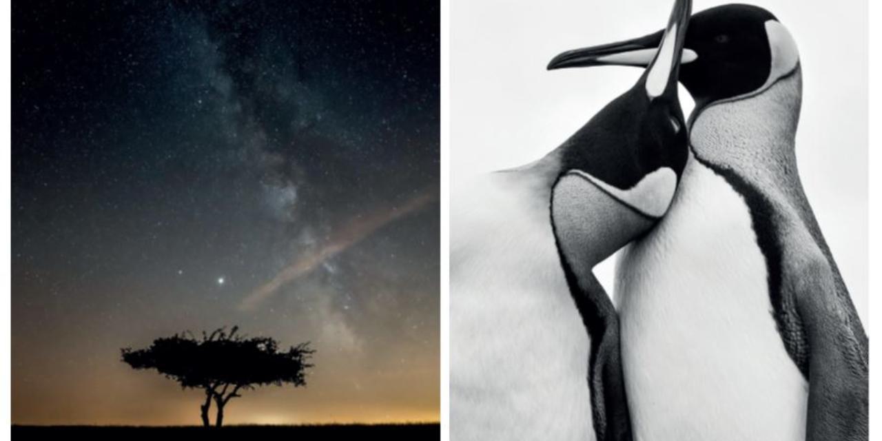 Nature en Revermont : rencontres photographiques 2021